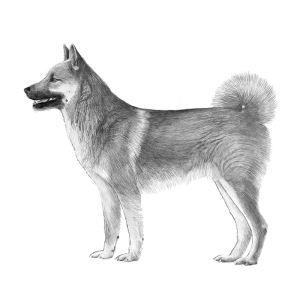 halleforshund-599