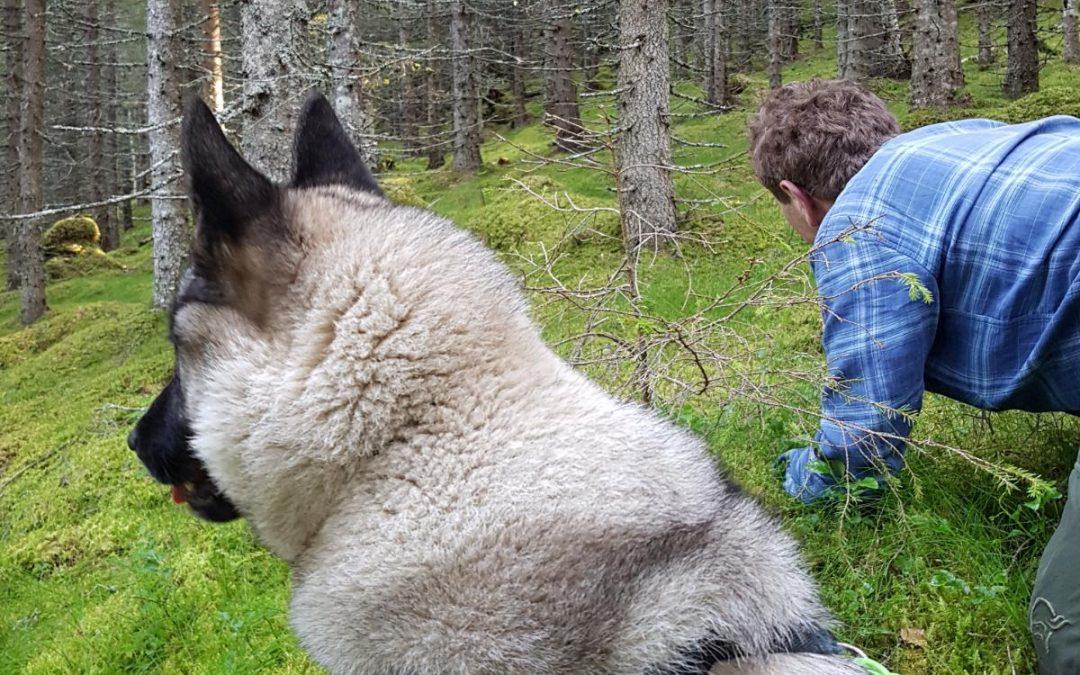 Premielister bandhund 16.08 – 30.11