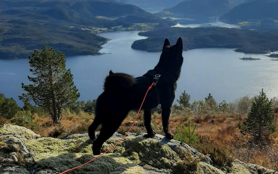 Dommermøte for bandhundprøver