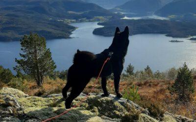 Resultat etter dommermøte – Bandhund