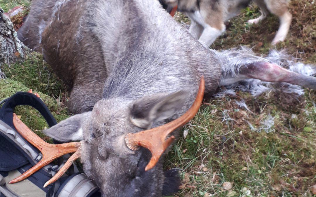 Høringsrunde 2 – Jaktprøveregler løshund