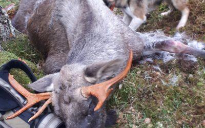 Premieliste separat løshund 2019